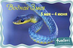 blue_snake